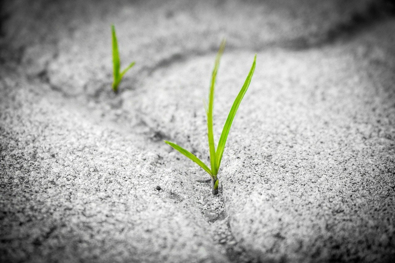 grass 1913167 1280